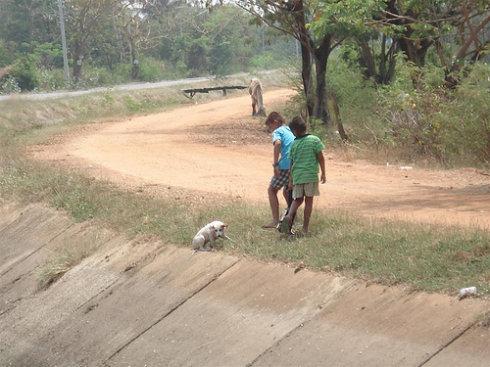两个小孩携手救起落水小狗[感人]���众山�