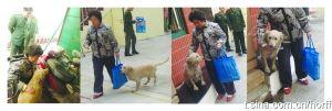 通过网友们的帮助,昨日小狗被主人领回